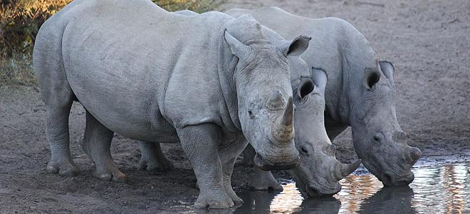 ãkhama rhino sanctuaryãã®ç»åæ¤ç´¢çµæ
